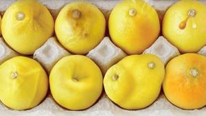 breast-cancer-lemons