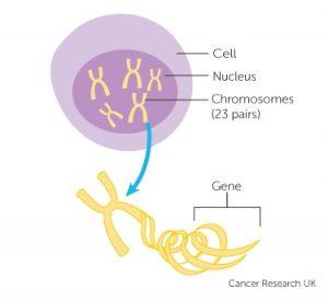 Family history and inherited cancer